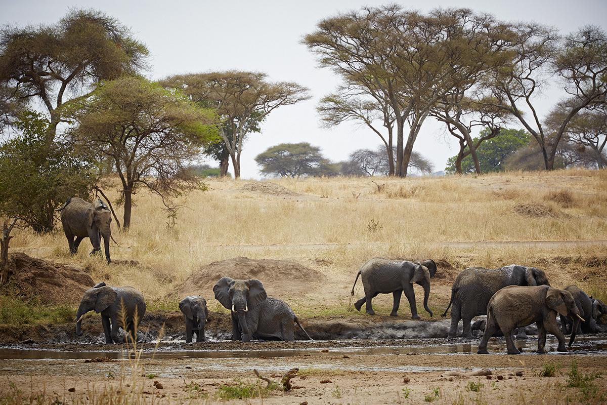 Tanzania 1200 2