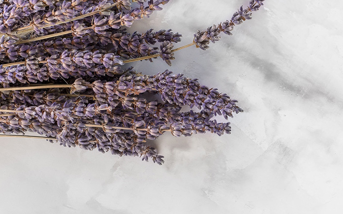 Lavendel_dana-devolk_Unsplash