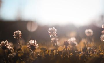Yoga-agenda: helende voorjaarsschoonmaak