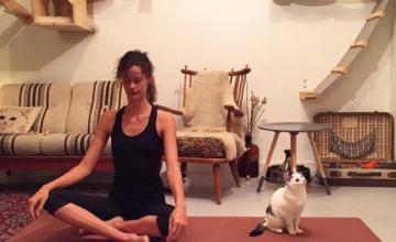 Maandagavond-tip: yoga tussen de poezen