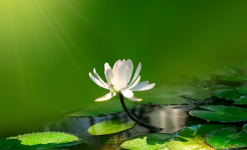 Doe de test: ben jij een echte yogi?
